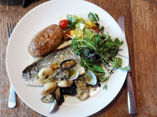 Colourful Grey Mullet